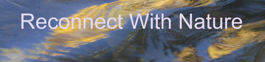 Reconnect With Nature Banner